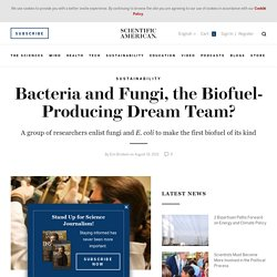Bacteria and Fungi Together: A Biofuel Dream Team?