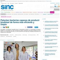 Patentan bacterias capaces de producir biodiésel de forma más eficiente y limpia