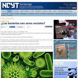 ¿Las bacterias son seres sociales?