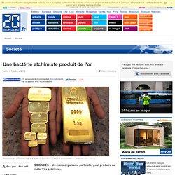 Une bactérie alchimiste produit de l'or