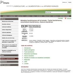 Maladies bactériennes de la tomate : Tache bactérienne, moucheture bactérienne, chancre bactérien