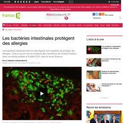 Les bactéries intestinales protègent des allergies