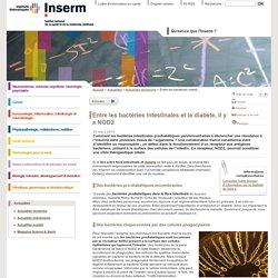 INSERM 25/03/15 Entre les bactéries intestinales et le diabète, il y a NOD2