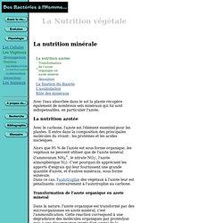 Des bactéries à l'Homme : Les végétaux - Nutrition
