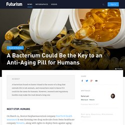 A Bacterium Could Be the Key to an Anti-Aging Pill for Humans