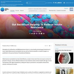Gut Bacterium Helping To Reverse Insulin Resistance