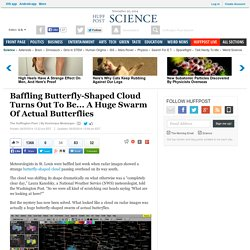 Baffling Butterfly-Shaped Cloud Turns Out To Be... A Huge Swarm Of Actual Butterflies