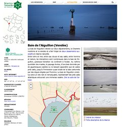 Baie de l'Aiguillon (Vendée)