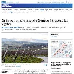 Week-end en balade: Grimper au sommet de Genève à travers les vignes - News Vivre: Voyages