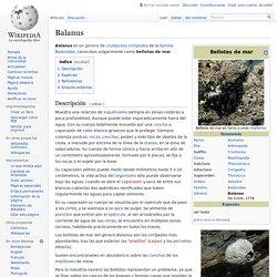 Balanus