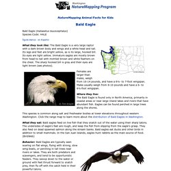 Bald Eagle Facts for Kids - NatureMapping