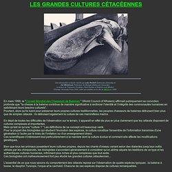 Baleines, orques, cachalots et dauphins : les grandes cultures de l'océan