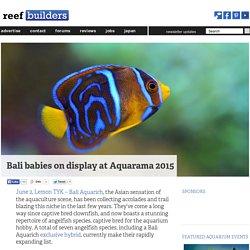 Bali babies on display at Aquarama 2015