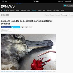 Balloons found to be deadliest marine plastic for seabirds - Science News - ABC News