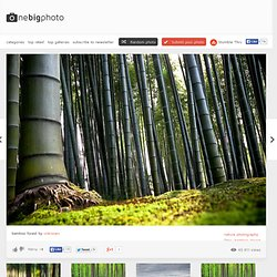 bamboo forest photo | one big photo - Nightly
