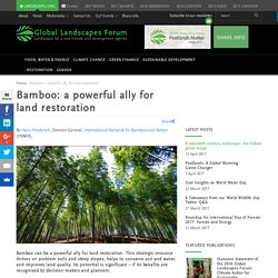 Bamboo: a powerful ally for land restoration