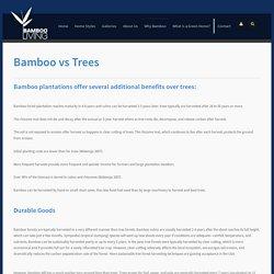 Bamboo vs Trees