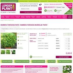 Bambou Fargesia Rufa - Vente jeunes plants de Bambou Fargesia Rufa pas cher