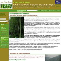 bambou, plante bambou, décoration bambou