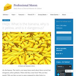 FAQs: What is the banana, why is it yellow, and is it dangerous? – Professional Moron