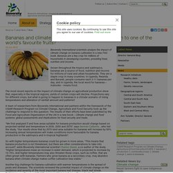 BIOVERSITY INTERNATIONAL 18/06/15 Bananas and climate change: what is going to happen to one of the world's favourite fruits?