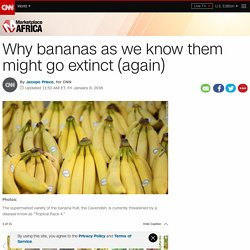 Why bananas as we know them might go extinct (again)