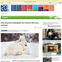 Pas d'accord à Bangkok sur l'avenir des ours polaires