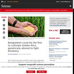 SCIENCEMAG 20/11/19 Bangladesh could be the first to cultivate Golden Rice, genetically altered to fight blindness