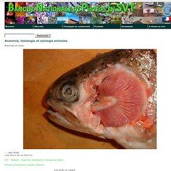 Branchies de poisson Banque d'images