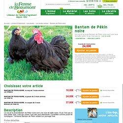 Bantam de Pékin noire : la Ferme de Beaumont, Les poules naines
