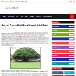 Banyan Tree In Hindi Benefits and Side Effects