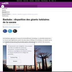 Baobabs : disparition des géants tutélaires de la savane