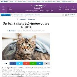 Un bar à chats éphémère ouvre à Paris