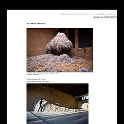 barbara hashimoto | junk mail