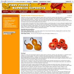 Fiery Foods and Barbecue SuperSite - Pepper Profile: Pubescens Species