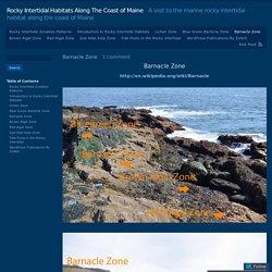 Rocky Intertidal Habitats Along The Coast of Maine