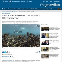 Great Barrier Reef scores D for health for fifth year in a row