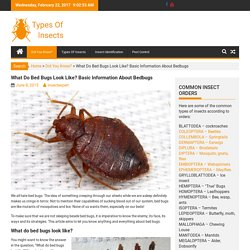 What Do Bed Bugs Look Like? Basic Information About Bedbugs