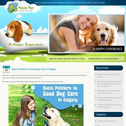 Basic Pointers to Good Dog Care in Calgary