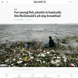 For young fish, plastic is basically the McDonald's all-day breakfast — Quartz