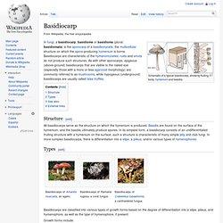 Basidiocarp