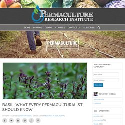Basil: What Every Permaculturalist Should Know