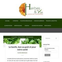 Le basilic, bon au goût et pour votre santé - Herbes et Vie