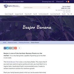 Basjoo Banana – BrighterBlooms.com