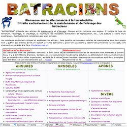 Batraciens : terrariophilie