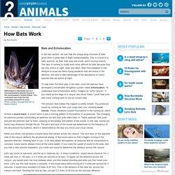Bats and Echolocation