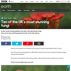 Earth - Ten of the UK's most stunning fungi