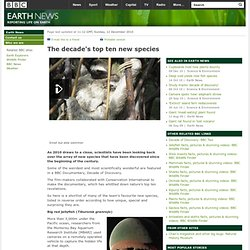 BBC - Earth News - The decade's top ten new species