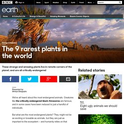 The 9 rarest plants in the world