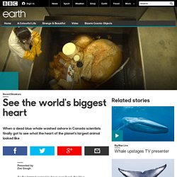 Earth - See the world's biggest heart